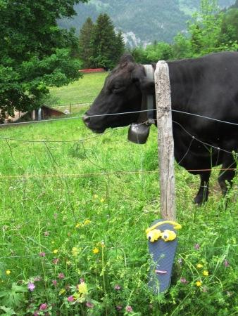 Sammy Sole hiking with us in the Swiss village of Lauterbrunnen.